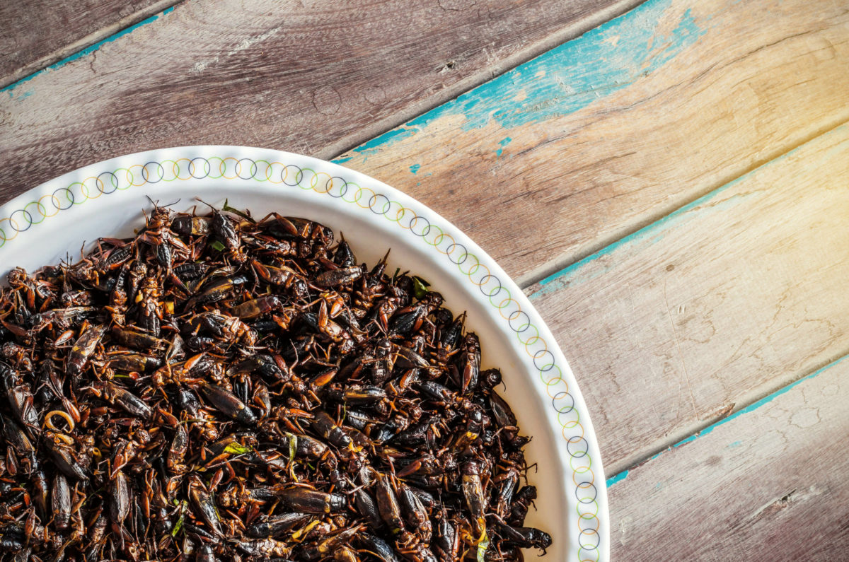 Should we eat more bugs?